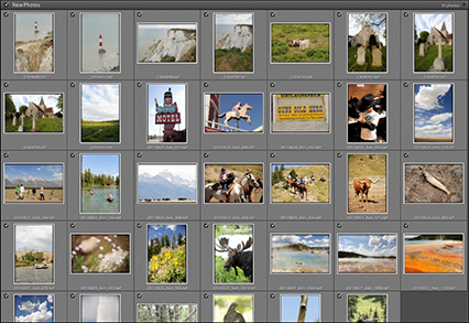 Lightroom photo library with meta data added